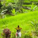 Autel de la Riziere - Jatiluwih - Bali