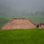 Rizieres arrosees - Jatiluwih - Bali