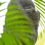 Vert de gris - Statue hindoue - Bali