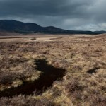 Langue dans la lande - Loch Muick - Ecosse
