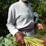 Vieil homme aux ignames - Hamjago - Mayotte