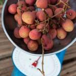Un kilo de letchi - Combani - Mayotte