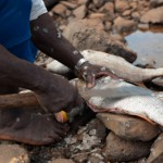 Pecheur aux ecailles - Hamjago - Mayotte