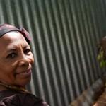 Cueillette de bilimbi - Boueni - Mayotte