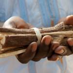 Ceci n'est pas du petit bois - Medecine - Senegal