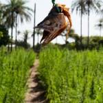 Fetiche pour plantation secrete - Casamance - Senegal