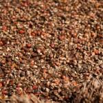 Fruits du palmier a huile - Casamance - Senegal