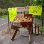 Sur la route - Plaine des palmistes - La Reunion