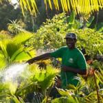Feu vert - Horticulture - Petite Ile - La Reunion