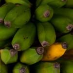Mains de bananes - Marche de St Paul - La Reunion