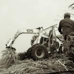 Le lancer - Recolte canne a sucre - Le Tampon - La Reunion