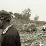 Arrêt sur récolte de canne a sucre - Le Tampon - La Reunion