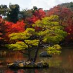 Ilot de verdure - Japon
