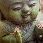 Genereux automne - Rakan - Japon