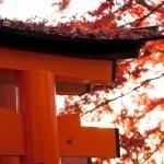Novembre rouge - Japon