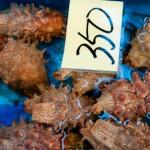 Concombre de mer - Japon