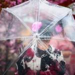 Derriere le parapluie - Japon