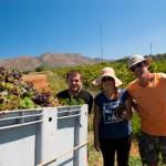 Famille de vignerons lors de la recolte - Crete