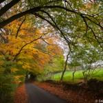 L'automne dans les Cotswolds - England