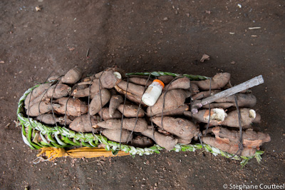 Manioc rapporte de l'abatis - Guyane