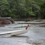 Chien intrepide - Guyane
