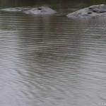 Ondees sur le fleuve Oyapock - Guyane