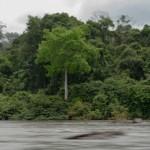 Fleuve Oyapock - Guyane