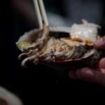 Abalone fraichement pechee - Mikazuki shinji - Kuzaki - Japon