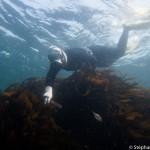 A la recherche des abalones -Osatsu - Japon