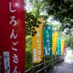 Bannieres du Shirongo matsuri - Sugashima - Japon