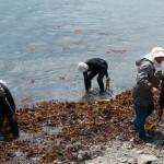 Ama d'algues -  Osatsu- Japon