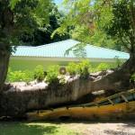 Ravages du precedent cyclone - La Dominique