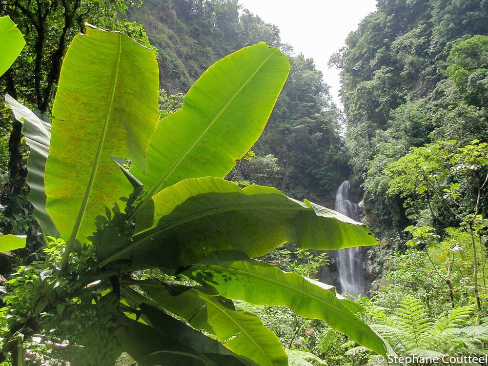 Vegetation luxuriante de La Dominique